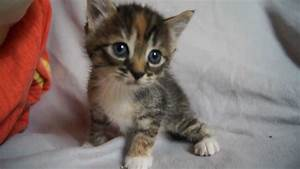 Cute Baby Kitten meows because Mama Cat is not there - YouTube