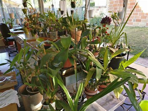 arrosage automatique special vacances pour plantes d interieur
