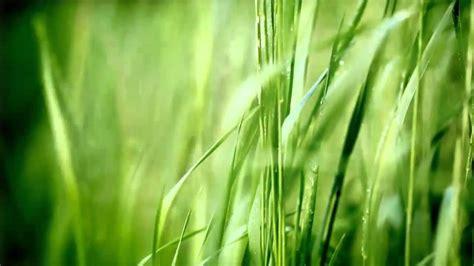 widex zen melodie green youtube