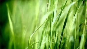 Widex - ZEN Melodie Green - YouTube  Green