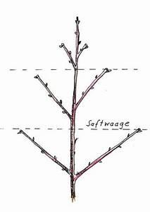Apfelbaum Schneiden Sommer : apfelbaum schneiden einfache tipps f r anf nger ~ Lizthompson.info Haus und Dekorationen