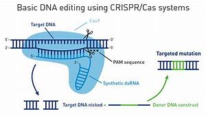 Pros And Cons Of Znfs  Talens  And Crispr  Cas
