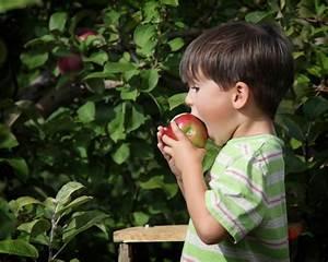 Was Ist Halbschatten : apfelbaum gedeiht er im halbschatten ~ Orissabook.com Haus und Dekorationen
