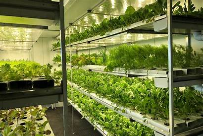 Hydroponic Farming Africa Change Lives Analytics Based
