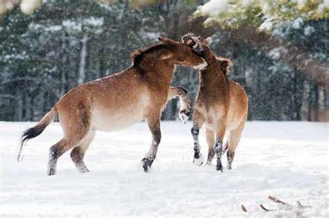 reserve biologique des monts d azur r 201 serve biologique des monts d azur parcs de d 233 couverte la clef verte qualit 233 tourisme c 244 te