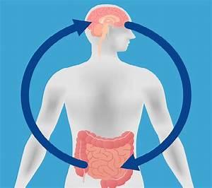 Los problemas intestinales pueden ser causados por el estres for Los problemas intestinales pueden ser causados por el estres