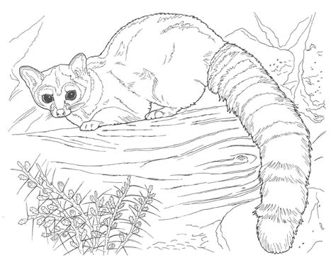 Astonishing Animal Coloring Pages Realistic Colossal Of