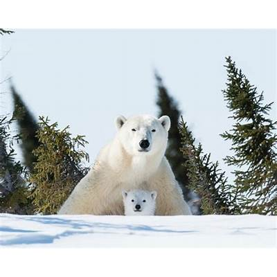 Playing with mom - Picture of Wapusk National Park