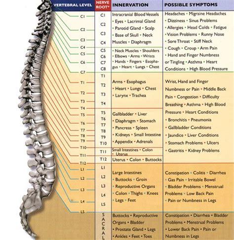nerve function chart anatomy pinterest nerves function  sciatic pain