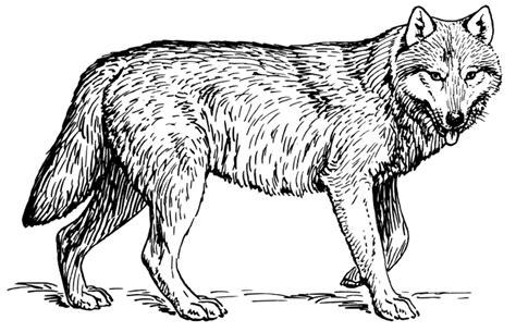 nos jeux de coloriage loup  imprimer gratuit page