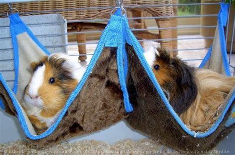 comment fabriquer un lit pour mon cochon d inde