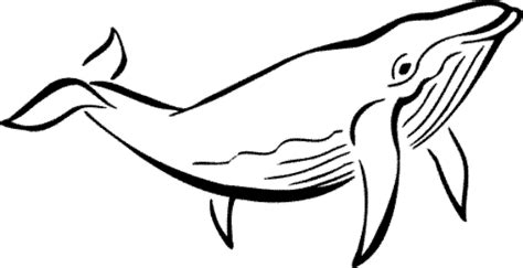 whale coloring pages clipart panda  clipart images