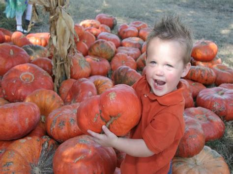 Pumpkin Patch Amarillo Tx by Pumpkin Patch In Medina Texas The Great Hill Country