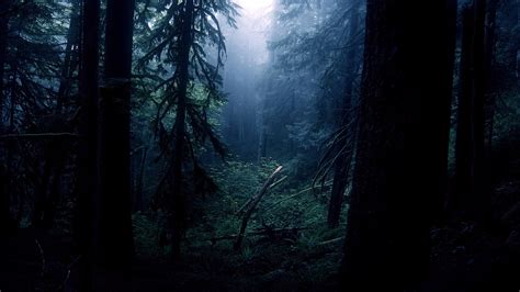 Night Forest Trees Wallpapers Hd / Desktop And Mobile
