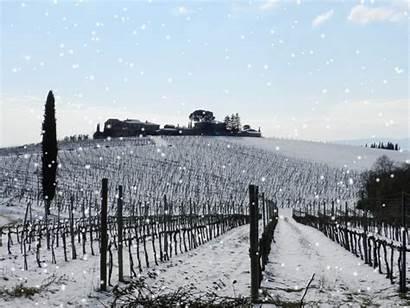 Palazzo Vecchio Return Vines Inverno Vigneti