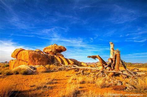 DELOPROJET | Mojave desert trail