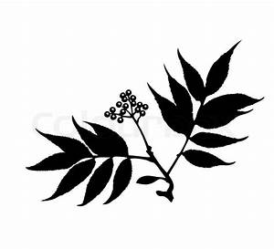 Vector Silhouette Of The Branch Of The Plant On White