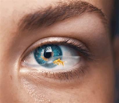 Eye Tears Fish Swim Picsart Sign Freetoedit