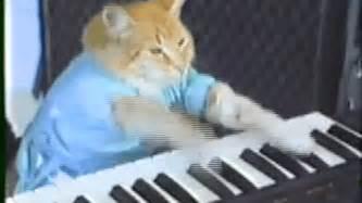 cat piano keyboard cat bored panda