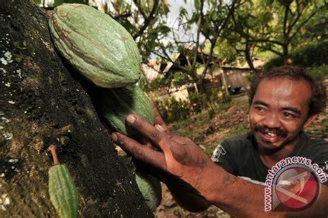 ladongi dikembangkan jadi pusat industri kakao sultra