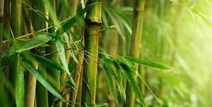 Choisir Un Meuble De Salle De Bain En Bambou Espace Aubade