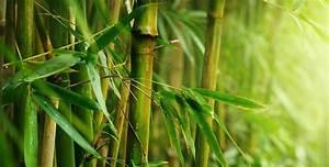 choisir un meuble de salle de bain en bambou espace aubade With bambou pour salle de bain