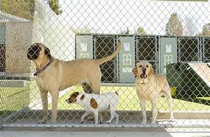 5 steps to prep your dog for the kennel petmd With dog boarding sites