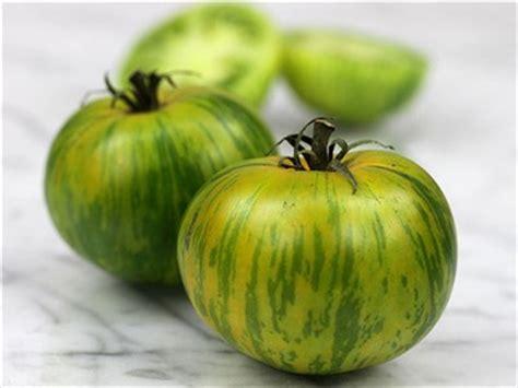 heirloom seeds green zebra tomato seeds baker creek heirloom seeds