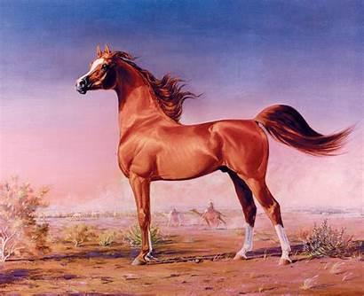 Arabian Horse Egyptian