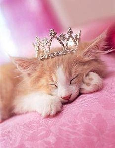 princess cat princess cats photo 14749811 fanpop