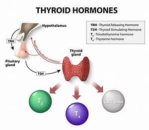 Thyrotropin Releasing Hormone (TRH): The Good and Bad ...