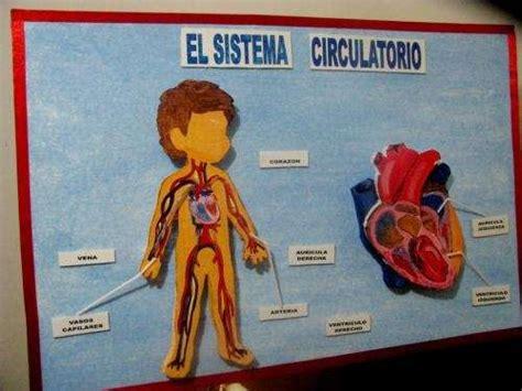 sistema circulatorio maqueta de los sistemas digestivo respiratorio circulatorio y excretor