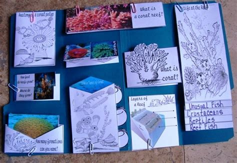 coral reef unit study lapbook and on ideas coral reefs homeschool and note
