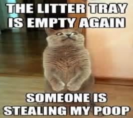 Poop Funny Cat Memes