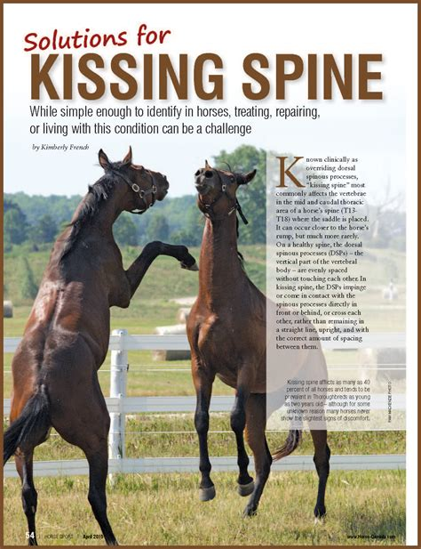 kissing spine horses horse