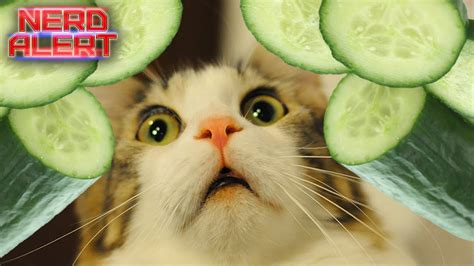 cucumbers cats scared why