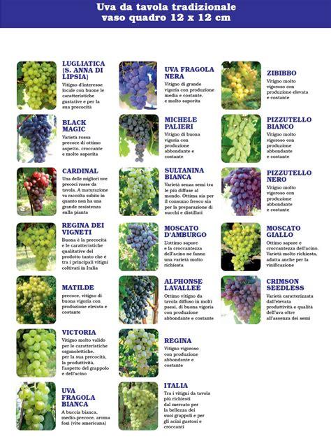 varietà uva da tavola uve da tavola tradizionali berry verona www berryverona it