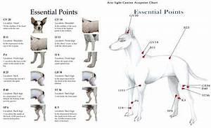 Acupressure Chart Canine Acupressure Charts Animal Acupressure
