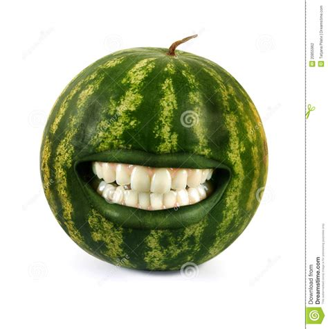 funny watermelon stock photography image