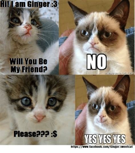Grumpy Cat Yes Meme - angry cat meme yes www pixshark com images galleries with a bite