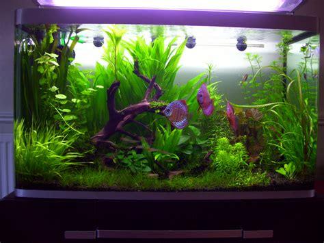 osaka 260l planted tank uk aquatic plant society