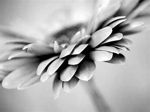 Black White Flower Photo Prints | Set of 3 Abstract Flower ...