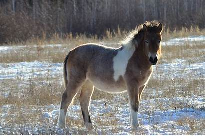 Horse Ancient Horses Prehistoric Clone Discovered Scientists
