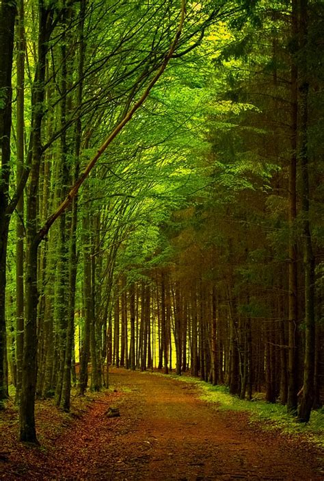Green Forest Image by Free Photo Green Forest Path Road Nature Free Image