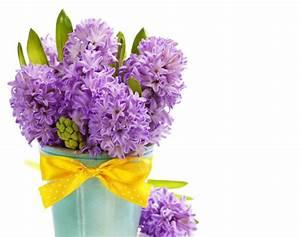 Blumenarten Az Mit Bild : 1001 blumenarten bilder und interessante fakten ~ Whattoseeinmadrid.com Haus und Dekorationen