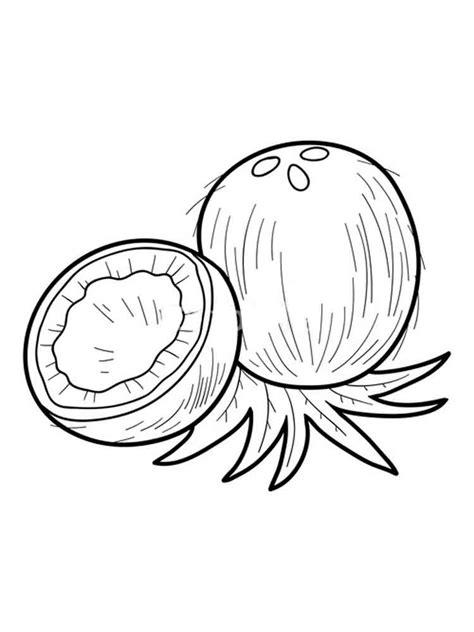coconut coloring page   clip art  clip art  clipart library