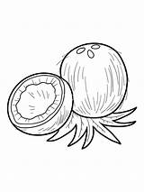 Coconut Coloring Pages Printable Fruit Moana Clipart Print Template Clip Fruits Library Templates Recommended Getcolorings Colorings sketch template