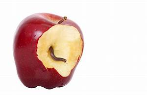 The Apple myth: Why security through obscurity isn't security