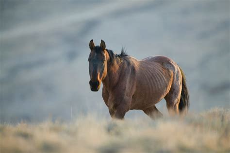 underweight horses solutions   hard keeper expert