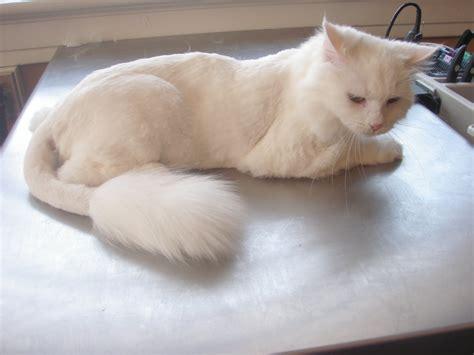 nose  tail pet care latest news april